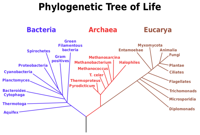 Tree of life based on Carl Woese's genetic Analysis. Image source Wikimedia commons By Eric Gaba